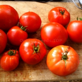 «Campbell» - Organic Tomato Seeds