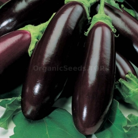 «Long Black» - Organic Eggplant Seeds