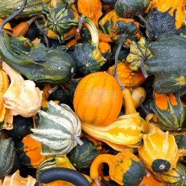 «Autumn Mix» - Organic Pumpkin Seeds