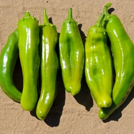 «Anaheim» - Organic Hot Pepper Seeds