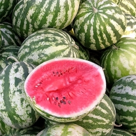 «Astrakhan» - Organic Watermelon Seeds