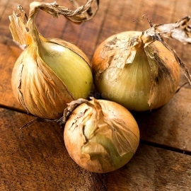 «Golden Standard» - Organic Onion Seeds