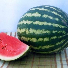 «Alliance» - Organic Watermelon Seeds