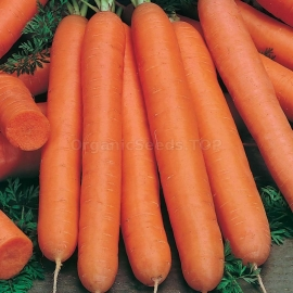«Flakkee» - Organic Carrot Seeds