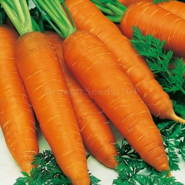 «Autumn King» - Organic Carrot Seeds