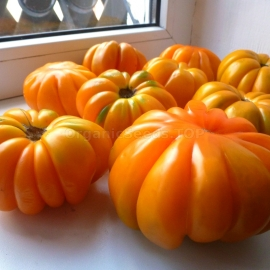 «American Ribbed Orange» - Organic Tomato Seeds