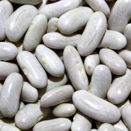 «Long Pod» - Organic Bean Seeds