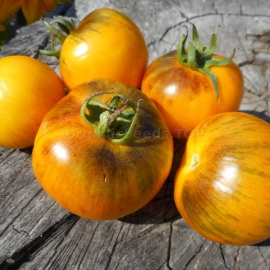 «Golden Tiger» - Organic Tomato Seeds