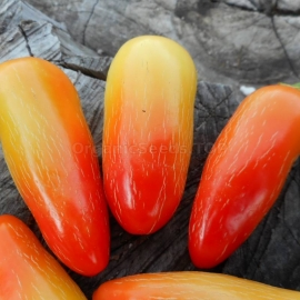 «Jalapeno White» - Organic Hot Pepper Seeds