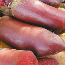 «Ataman» - Organic Beetroot Seeds