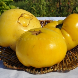 «Dixie Golden Giant» - Organic Tomato Seeds