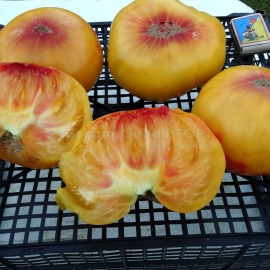«Yellow Paw Paw» - Organic Tomato Seeds