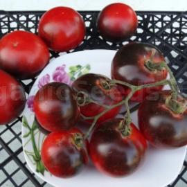 5 Wild Card Blues Tomato seeds Heirloom!