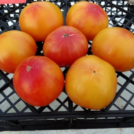 «Yellow Stone Bi-Color» - Organic Tomato Seeds