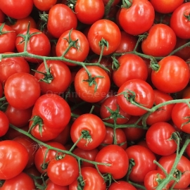 «Winter Cherry» - Organic Tomato Seeds