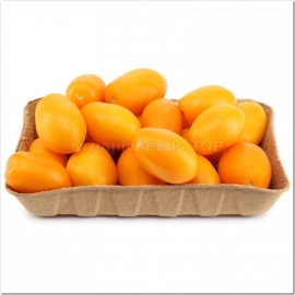 «Sweet Golden Plum» - Organic Tomato Seeds