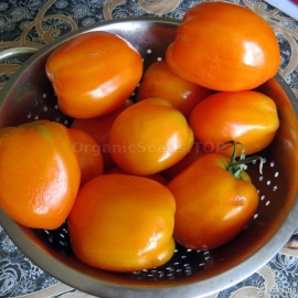 «Verna Orange» - Organic Tomato Seeds