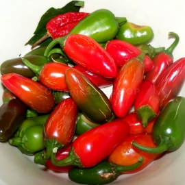 «Jalapeno Red» - Organic Hot Pepper Seeds