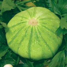 «Malachite» - Organic Squash Seeds
