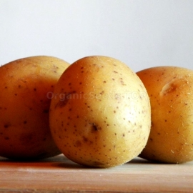 «Gourmand» - Organic Potato Seeds