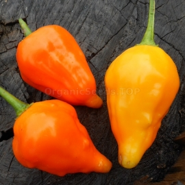 «Peruviano Arancio» - Organic Hot Pepper Seeds