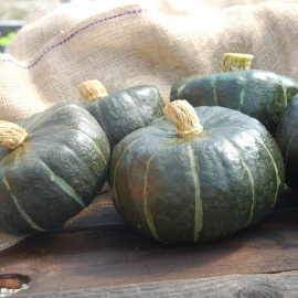 «Burgess Buttercup» - Organic Pumpkin Seeds