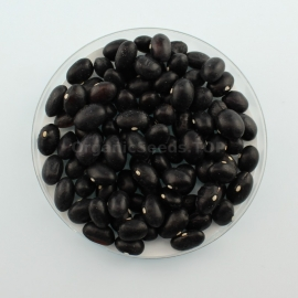 «Marvel of Venice» - Organic Bean Seeds