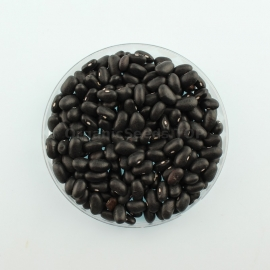 «Black night» - Organic Bean Seeds