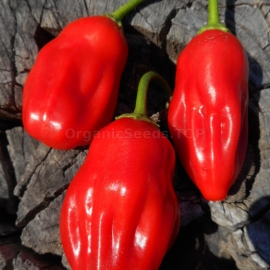 «Aji Ecuadorian red» - Organic Hot Pepper Seeds