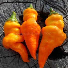 «Monkey Face Yellow» - Organic Hot Pepper Seeds