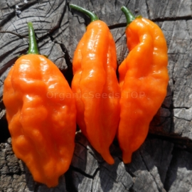 «Sherwoods Carbonero» - Organic Hot Pepper Seeds