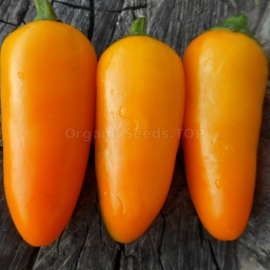 «Jalapeno NuMex Orange Spice» - Organic Hot Pepper Seeds