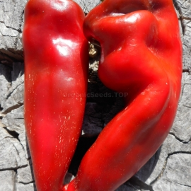 Фото «Kapia» - Organic Pepper Seeds