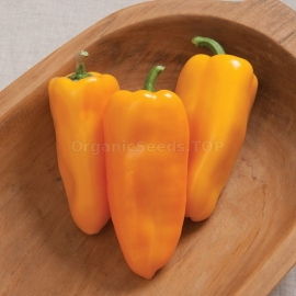Фото «Alba» - Organic Pepper Seeds