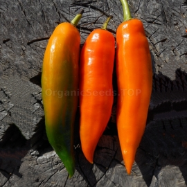 «Aji Amarillo» - Organic Hot Pepper Seeds