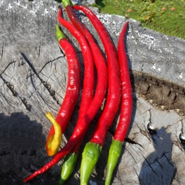 Фото «Cayenne Joe's Long» - Organic Hot Pepper Seeds