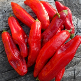 Фото «Mako Kokoo» - Organic Hot Pepper Seeds