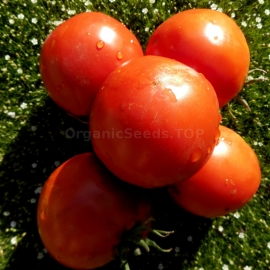 «Minusinsky Apple Sack» - Organic Tomato Seeds
