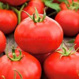 Фото «Raspberry Rodeo» - Organic Tomato Seeds