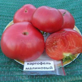 Фото «Potato raspberry» - Organic Tomato Seeds