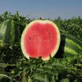 Фото «Producer» - Organic Watermelon Seeds