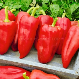 Фото «Swallow» - Organic Pepper Seeds