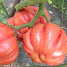 Фото «American Ribbed Red» - Organic Tomato Seeds