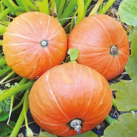 Фото «Amazon» - Organic Pumpkin Seeds