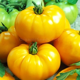 Фото «Giant lemon» - Organic Tomato Seeds