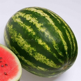 Фото «Top Gun» - Organic Watermelon Seeds