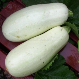 Фото «White Bush» - Organic Squash Seeds
