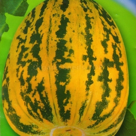 Фото «Sweetie» - Organic Melon Seeds