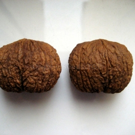 Organic Eastern Black Walnut Seeds (Juglans Nigra)