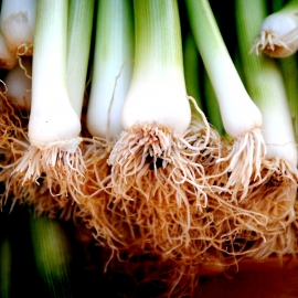 «Titan» - Organic Welsh Onion Seeds